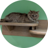 Easily adopt Matt at Harmony House for Cats and be a part of the pet adoption, animal rescue and welfare movement.