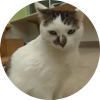 Easily adopt Lynessa at Harmony House for Cats and be a part of the pet adoption, animal rescue and welfare movement.