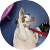 Easily adopt Nina at Pets & Vets, USA and be a part of the pet adoption, animal rescue and welfare movement.