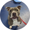 Easily adopt Donny at Pets & Vets, USA and be a part of the pet adoption, animal rescue and welfare movement.