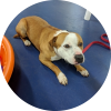 Easily adopt Graham at Pets & Vets, USA and be a part of the pet adoption, animal rescue and welfare movement.
