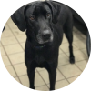 Easily adopt Rosie at Tiny N Tall Rescue and be a part of the pet adoption, animal rescue and welfare movement.