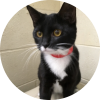 Easily adopt Elsa at Petsmart Charities - Lincoln Park and be a part of the pet adoption, animal rescue and welfare movement.