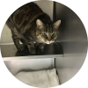 Easily adopt Zoey at Petsmart Charities - Lincoln Park and be a part of the pet adoption, animal rescue and welfare movement.