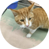 Easily adopt BamBam at Petsmart Charities - Lincoln Park and be a part of the pet adoption, animal rescue and welfare movement.