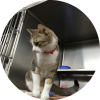 Easily adopt JJ at Petsmart Charities - Lincoln Park and be a part of the pet adoption, animal rescue and welfare movement.