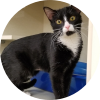 Easily adopt HOLLY at Strays In The Garden Rescue and be a part of the pet adoption, animal rescue and welfare movement.