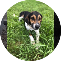 Easily adopt Auggie at :shelter_name and be a part of the pet adoption, animal rescue and welfare movement.