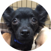 Easily adopt Ursula at Tiny N Tall Rescue and be a part of the pet adoption, animal rescue and welfare movement.
