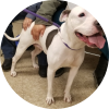 Easily adopt Ella at Chicago Animal Care & Control and be a part of the pet adoption, animal rescue and welfare movement.