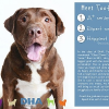 Easily adopt Tootie at Delaware Humane Association and be a part of the pet adoption, animal rescue and welfare movement.