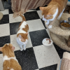 Easily adopt Cat Room at Famous Fido Rescue and be a part of the pet adoption, animal rescue and welfare movement.
