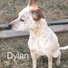 Easily adopt Dylan at Friends For Life Animal Society and be a part of the pet adoption, animal rescue and welfare movement.