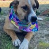 Easily adopt Jewel at Mostly Muttz Rescue, Inc. and be a part of the pet adoption, animal rescue and welfare movement.