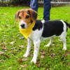 Easily adopt Fiona at Animal Rescue Foundation of Louisiana, Inc. and be a part of the pet adoption, animal rescue and welfare movement.