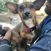 Easily adopt Tootsie at Cause for SB Paws and be a part of the pet adoption, animal rescue and welfare movement.