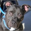Easily adopt Lilo at Doggie Harmony and be a part of the pet adoption, animal rescue and welfare movement.
