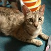 Easily adopt Sweet mom Rosalie at Brooklyn Animal Action and be a part of the pet adoption, animal rescue and welfare movement.