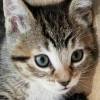 Easily adopt Pop at Saving Pets One at a Time and be a part of the pet adoption, animal rescue and welfare movement.