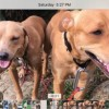 Easily adopt Lenny and Penny PR Twins at Zani's Furry Friends and be a part of the pet adoption, animal rescue and welfare movement.