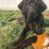 Easily adopt Jethro - Adoption pending at Gentle Jake's Coonhound Rescue and be a part of the pet adoption, animal rescue and welfare movement.