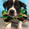 Easily adopt Baby Brucie at K-9 Lifesavers and be a part of the pet adoption, animal rescue and welfare movement.