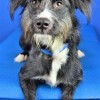 Easily adopt Kiki D4428 at Wags and Whiskers Animal Rescue of MN and be a part of the pet adoption, animal rescue and welfare movement.