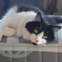 Easily adopt Josie at Annex Cat Rescue and be a part of the pet adoption, animal rescue and welfare movement.