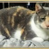 Easily adopt MOMMA AND DAUGHTER STARR at Animalert Pet Adoption Inc. and be a part of the pet adoption, animal rescue and welfare movement.
