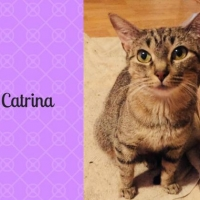 Easily adopt Catrina at Neveah's Charity of West Lincoln and be a part of the pet adoption, animal rescue and welfare movement.