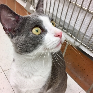 Easily adopt Junior at Chicago Animal Care & Control and be a part of the pet adoption, animal rescue and welfare movement.