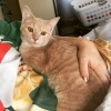 Easily adopt NALA at Strays In The Garden Rescue and be a part of the pet adoption, animal rescue and welfare movement.