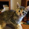 Easily adopt DAISY at Kitties For Keeps Rescue and be a part of the pet adoption, animal rescue and welfare movement.