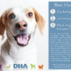 Easily adopt Max at Delaware Humane Association and be a part of the pet adoption, animal rescue and welfare movement.