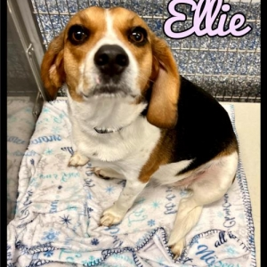 Easily adopt Ellie - 2110297 / 2021 at Maumelle Friends of the Animals and be a part of the pet adoption, animal rescue and welfare movement.