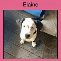 Easily adopt Elaine *courtesy listing* at Pets Are Worth Saving and be a part of the pet adoption, animal rescue and welfare movement.