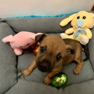 Easily adopt ! Angelica at TLC with PUPS and be a part of the pet adoption, animal rescue and welfare movement.