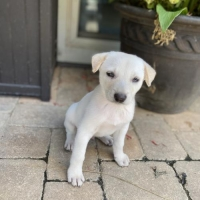 Easily adopt Olaf at :shelter_name and be a part of the pet adoption, animal rescue and welfare movement.