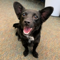 Easily adopt Lily (#635) at North Utah Valley Animal Shelter and be a part of the pet adoption, animal rescue and welfare movement.