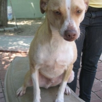 Easily adopt Big Dorito at :shelter_name and be a part of the pet adoption, animal rescue and welfare movement.