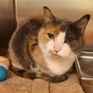 Easily adopt Birdie at Fancy Cats Rescue Team and be a part of the pet adoption, animal rescue and welfare movement.