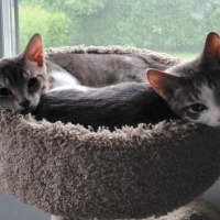 Easily adopt Thor and Loki at Community Animal Rescue Effort and be a part of the pet adoption, animal rescue and welfare movement.