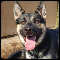 Easily adopt CAS at :shelter_name and be a part of the pet adoption, animal rescue and welfare movement.