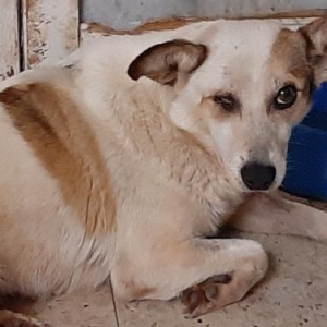 Easily adopt Nani at Zani's Furry Friends and be a part of the pet adoption, animal rescue and welfare movement.