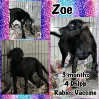 Easily adopt Zo at :shelter_name and be a part of the pet adoption, animal rescue and welfare movement.