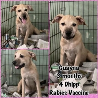 Easily adopt Guava at :shelter_name and be a part of the pet adoption, animal rescue and welfare movement.