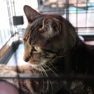 Easily adopt Wasabi (FCID#  06/15/2020 - 17 Trainer) at Forgotten Cats, Inc. and be a part of the pet adoption, animal rescue and welfare movement.