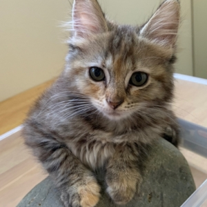 Easily adopt Rose at Animal Rescuers Without Borders and be a part of the pet adoption, animal rescue and welfare movement.