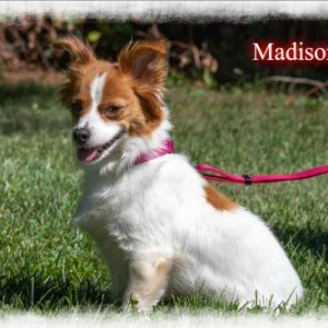 Easily adopt Madison at LNF Dog Rescue Adoption Center and be a part of the pet adoption, animal rescue and welfare movement.