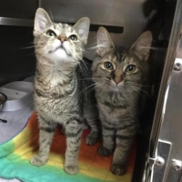 Easily adopt Addy and Maddie at Berkeley County Humane Society and be a part of the pet adoption, animal rescue and welfare movement.